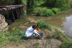 Замор риби на Кічкарівських ставках призвів до поширення смороду