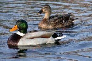 Погода на неділю, 17 листопада: рахуйте качок і остерігайтеся нечистої сили
