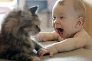 На Рівненщині кіт убив 4-місячне немовля