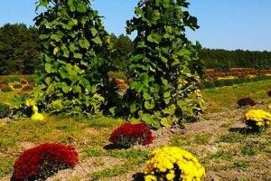 Біля траси Луцьк-Ковель для волинян відкрили плантації квітів