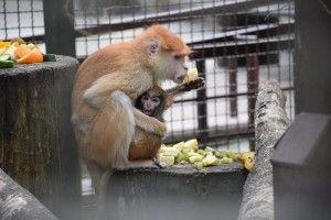 Чому годувати мешканців зоопарку категорично не можна?