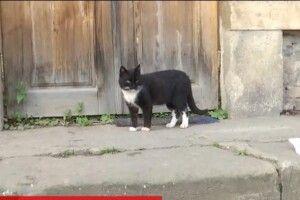 300 кілометрів подолав кіт, щоб повернутися у рідний монастир