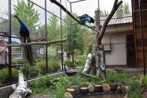 У Луцькому зоопарку збудували новий вольєр для павичів