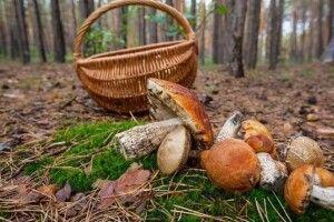 Не ходи там, де не знаєш, або Що робити, якщо пішли за грибами і заблукали