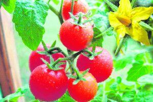 Багато квіток— неозначає великий урожай