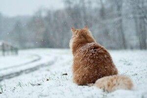 Погода на понеділок, 30 березня: Теплий Олекса... приніс грандіозне похолодання!