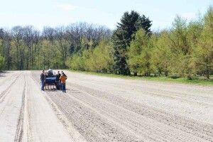 Лісівники Волині заготовили рекордну кількість насіння