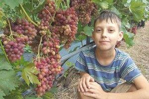 Чотири сотки виноградної любові