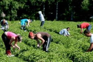 Армія українських заробітчан у Польщі скоро перетне позначку в 500 тисяч «багнетів»