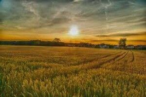 Аграріям здешевлять кредити для купівлі землі: Кабмін схвалив план