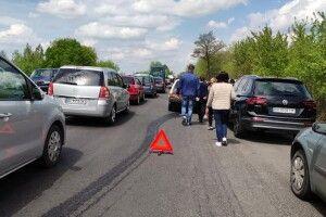 Рекордна кількість транспорту: на трасі Луцьк-Ковель – великий затор через фестиваль тюльпанів (Фото)