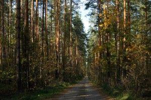 У Рівненській громаді хочуть збудувати дорогу через ліс, щоб возити дітей у школу