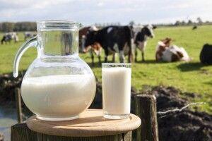 На Волині відкриють 50 молочних ферм