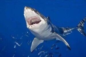 Повідомили подробиці нападу акули на українку та її сина в Єгипті