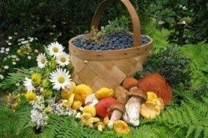 Фіскали Волині взялися за збирачів дарів лісу
