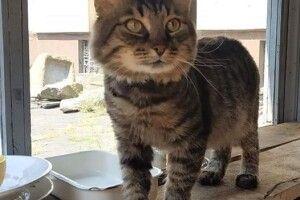 У Дніпрі кіт Семен влаштувався на роботу в історичний музей