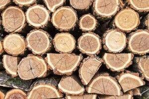 У волиянян вилучили близько сотні кубів деревини: тривають обшуки