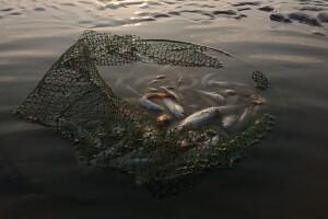 20 кілограмів риби допомогли врятувати небайдужі