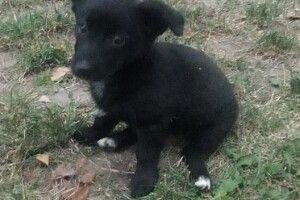 У Луцьку шукають господаря для чорноротого собацюри – віддають разом із будою (фото)