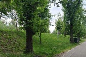 Луцьк озеленять за 120 мільйонів