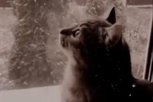 На Волині випав перший сніг: кіт-воркіт в захваті (Відео)