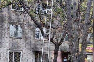 Бійцям ДСНС довелося рятувати вагітну багатодітну даму, яка видерлася на вершечок височезного дерева (Фото)