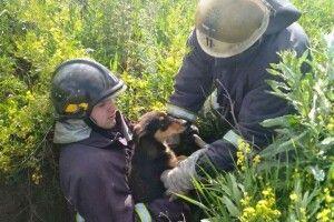 Бійці ДСНС врятували із закинутого колодязя бідосиків-барбосиків (Фото)