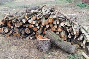 Волинянин заплатить за незаконно зрубані дрова в лісовому господарстві