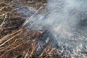 На Арцеулова злапали будівельників, які спалювали сухе гілля