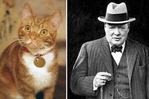Гарбуз із секретом: «Заберіть від мене цих кошенят, інакше я закохаюся» (Інтелектуальна вікторина)