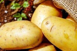 На Волині планують збудувати завод із переробки картоплі
