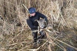 Бійці ДСНС та водолази врятували на Хрінницькому водосховищі козулю (фото)