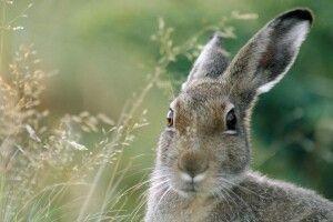 Прогноз погоди на суботу, 9 листопада: приглядаймося до зайців – колір їхнього хутра покаже, чи далеко зима