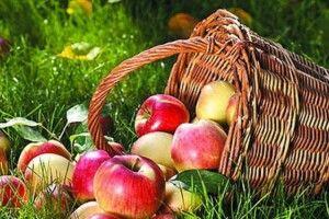 Щоб довго смакувати яблуками