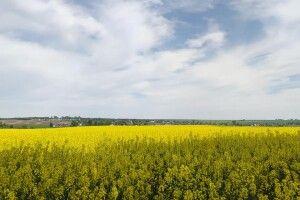 Скільки коштуватиме гектар землі в Україні після 1 липня