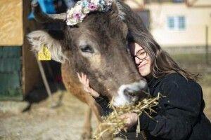 Хочеш бути здоровим— обійми корову!