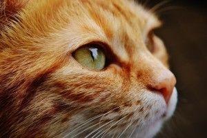 На Полтавщині живодеру, який позбиткувався над котом, дали шість років в'язниці