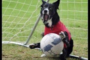 В Аргентині під час футбольного матчу фантастичний сейв видав... пес, який вискочив на поле (відео)