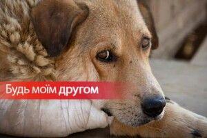 З нагоди Міжнародного дня безпритульних тварин волинян закликають вхопити за хвіст своє чотирилапе щастя
