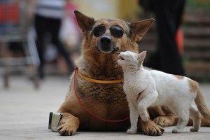 Французьким собакам заборонили гавкати