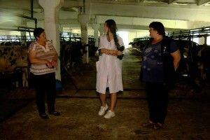 Журналістка «Волині» вперше вжитті доїла корову угосподарстві «Рать», денайщасливіші вкраїні доярки (Відео)