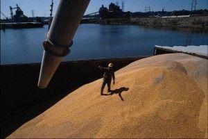 Ціни на українську пшеницю зростають