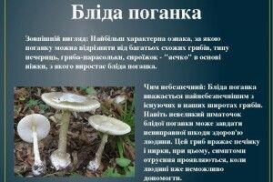 Сезон отруєнь грибами відкрили на Рівненщині