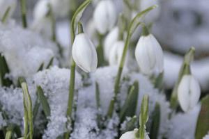 Погода на понеділок, 8 березня:  зима ще не відступить