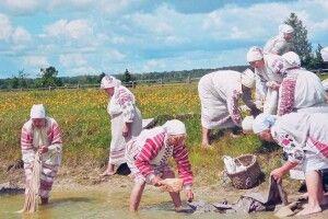 Вся Україна побачила, якуВидерті нетільки співають, ай вибілюють полотно