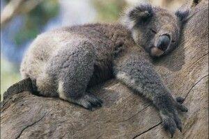 Відзавтра звірина Рівненського зоопарку лягатиме спати на пів години раніше