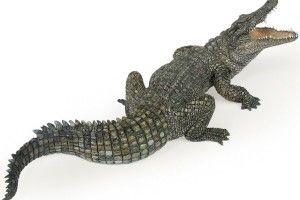 Вкраїнська крокодила наім'я Ґодзілла
