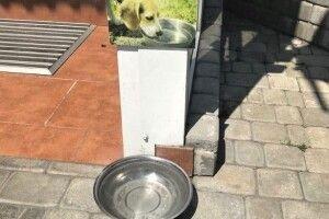 Хто краде собачий посуд біля Луцького ЦНАПу?