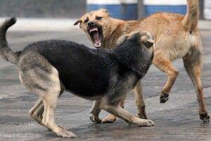 На Волині собаки загризли троє теляток