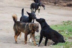 У селищі на Волині зграя собак накинулася на 9-річну дівчинку